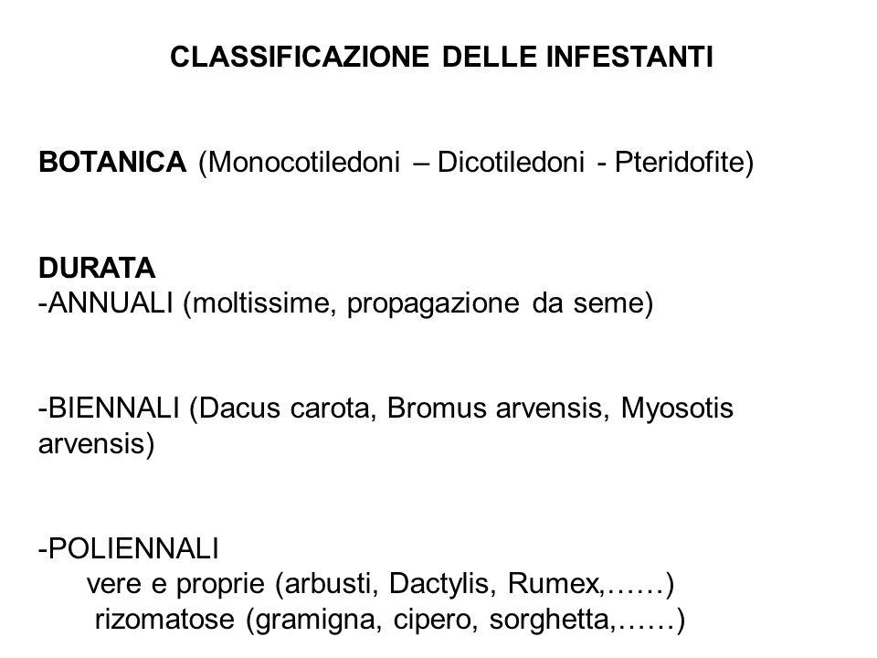CLASSIFICAZIONE DELLE INFESTANTI