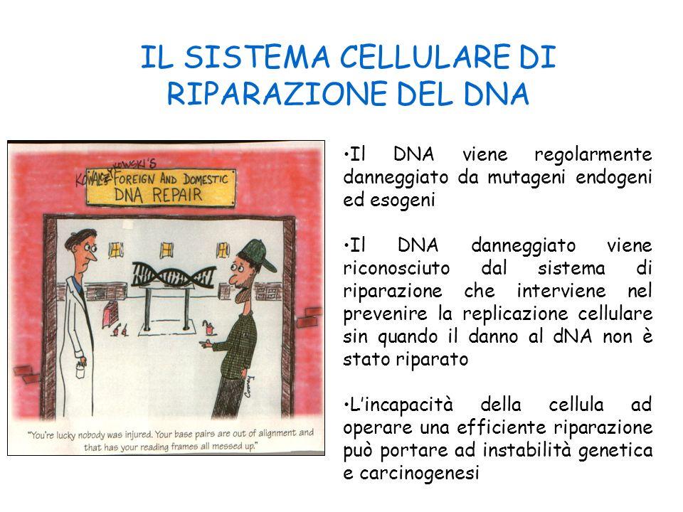 IL SISTEMA CELLULARE DI RIPARAZIONE DEL DNA