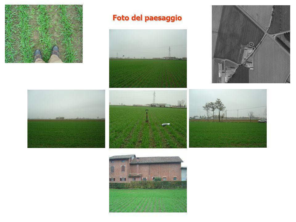 Foto del paesaggio