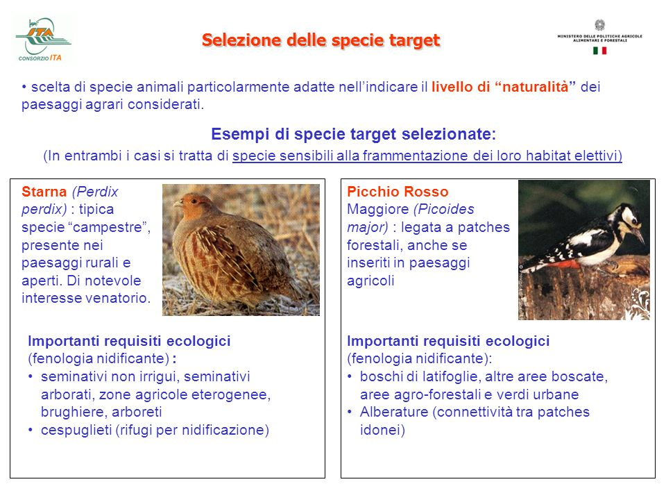 Selezione delle specie target