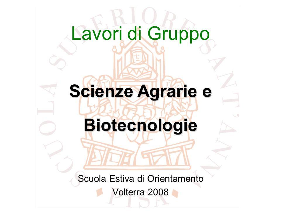 Scuola Estiva di Orientamento Volterra 2008