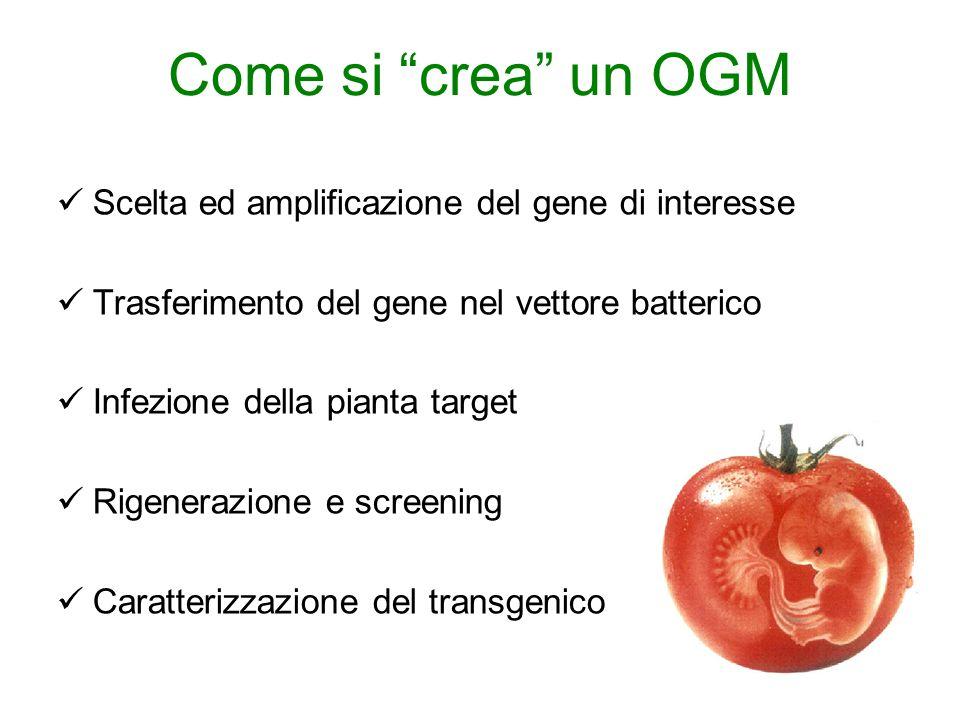 Come si crea un OGM Scelta ed amplificazione del gene di interesse