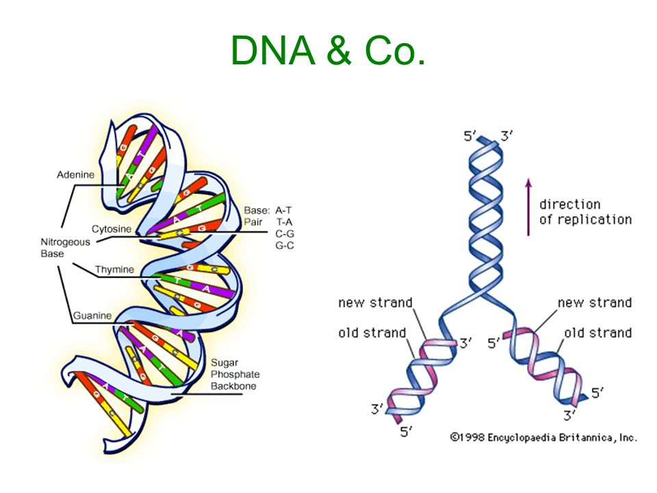 DNA & Co.