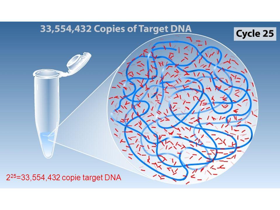 225=33,554,432 copie target DNA