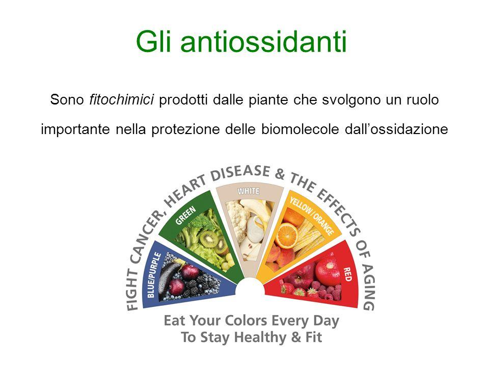Gli antiossidanti Sono fitochimici prodotti dalle piante che svolgono un ruolo importante nella protezione delle biomolecole dall'ossidazione.