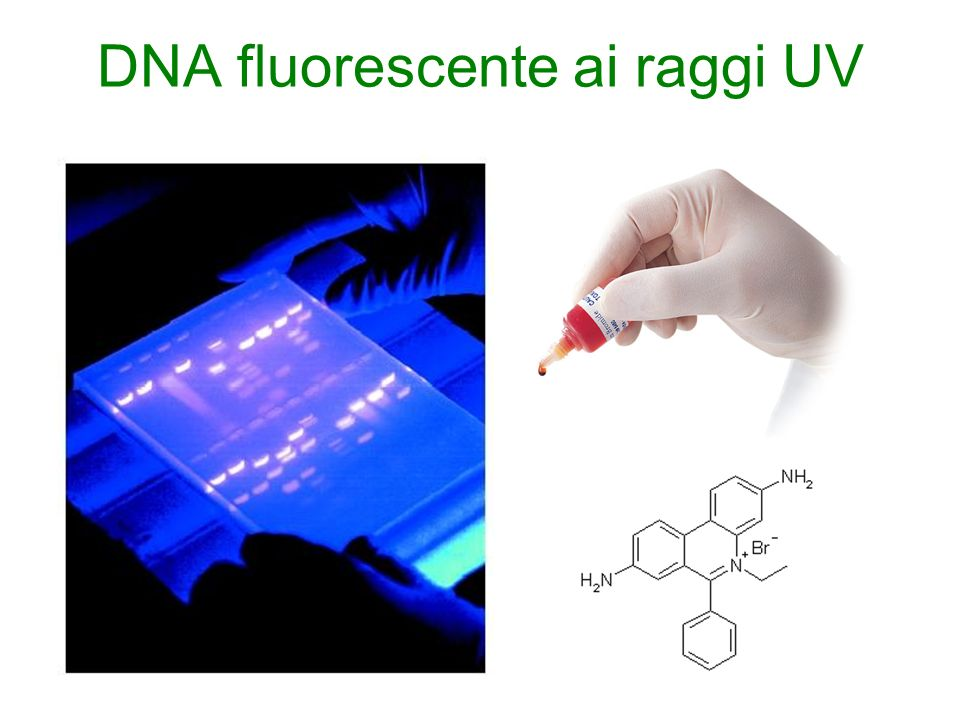 DNA fluorescente ai raggi UV