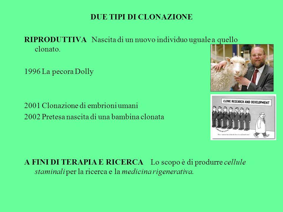 DUE TIPI DI CLONAZIONE RIPRODUTTIVA Nascita di un nuovo individuo uguale a quello clonato. 1996 La pecora Dolly.