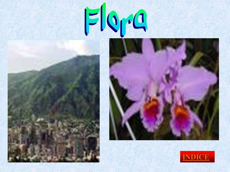 Flora INDICE