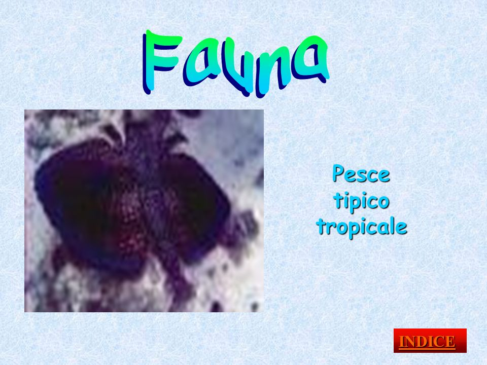 Pesce tipico tropicale