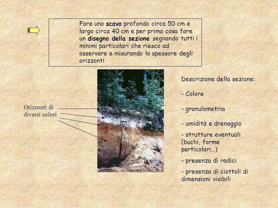 Fare uno scavo profondo circa 50 cm e largo circa 40 cm e per prima cosa fare un disegno della sezione segnando tutti i minimi particolari che riesco ad osservare e misurando lo spessore degli orizzonti