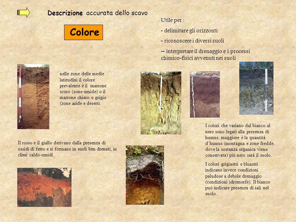 Descrizione accurata dello scavo