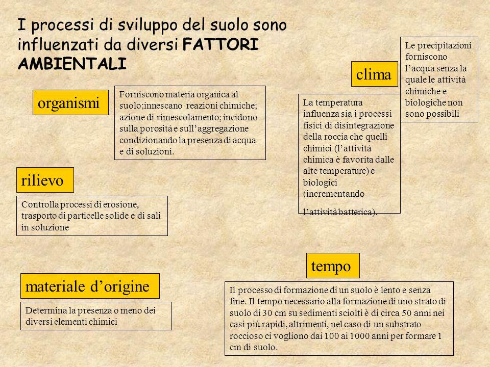 I processi di sviluppo del suolo sono influenzati da diversi FATTORI AMBIENTALI