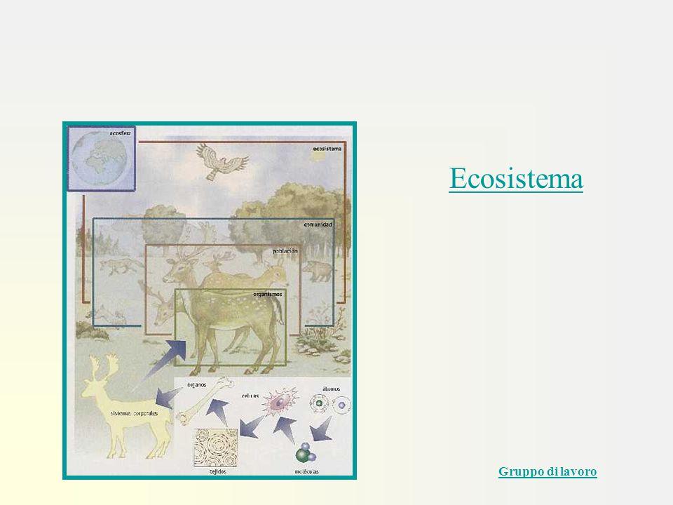 Ecosistema Primi passi con Powerpoint Gruppo di lavoro