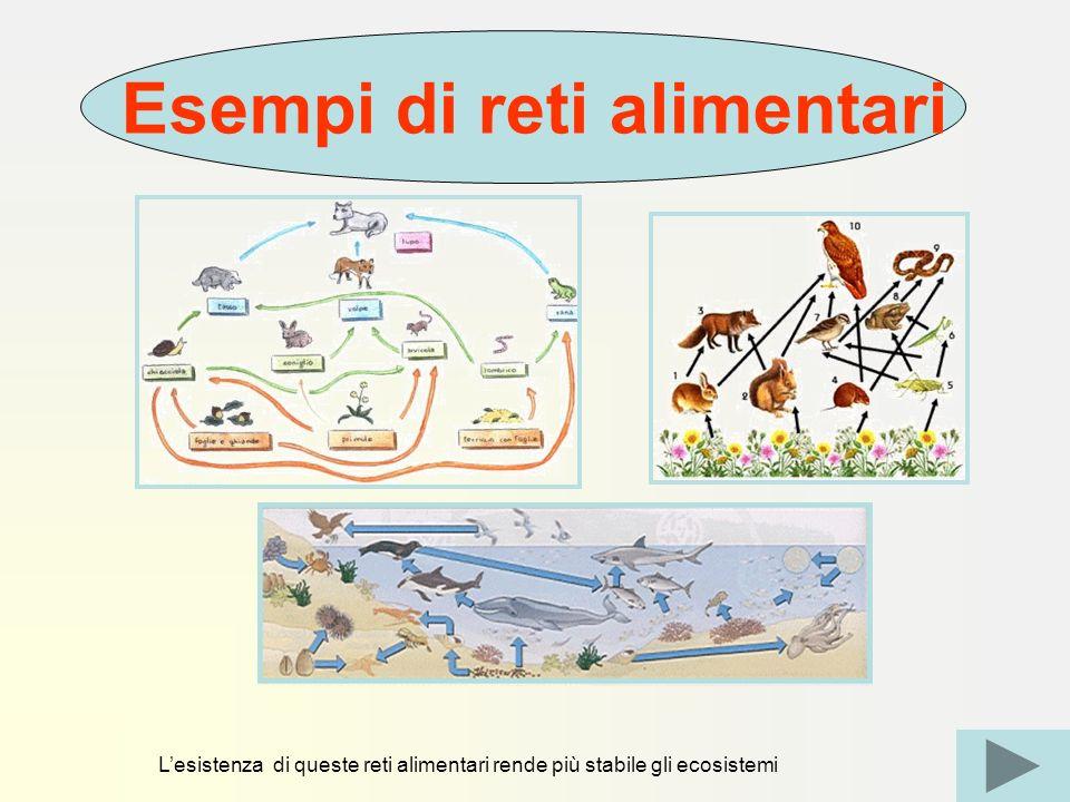 Esempi di reti alimentari