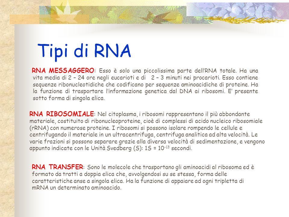 Tipi di RNA