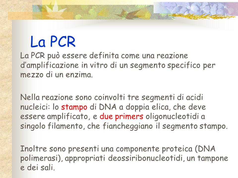 La PCR La PCR può essere definita come una reazione d'amplificazione in vitro di un segmento specifico per mezzo di un enzima.