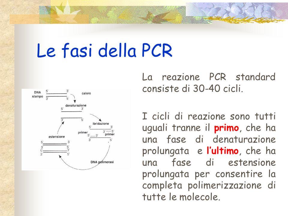 Le fasi della PCR La reazione PCR standard consiste di 30-40 cicli.
