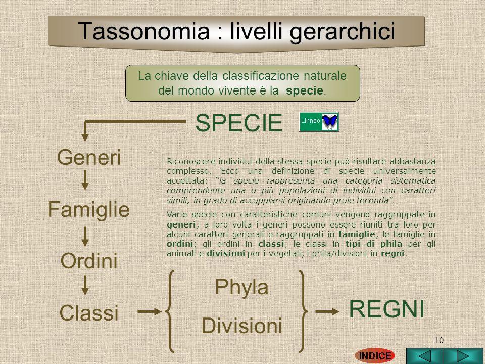 Tassonomia : livelli gerarchici