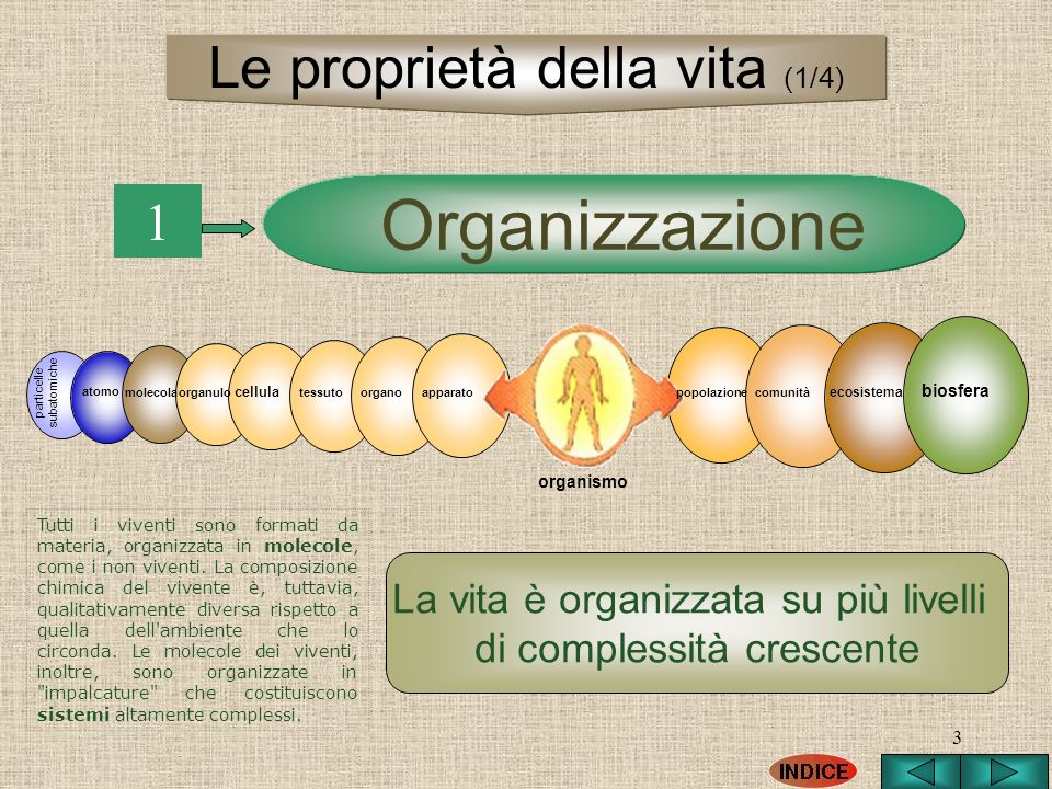 Organizzazione Le proprietà della vita (1/4) 1