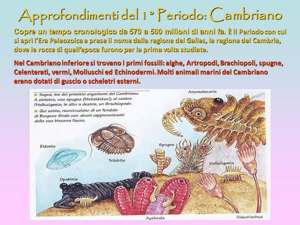 Approfondimenti del 1° Periodo: Cambriano