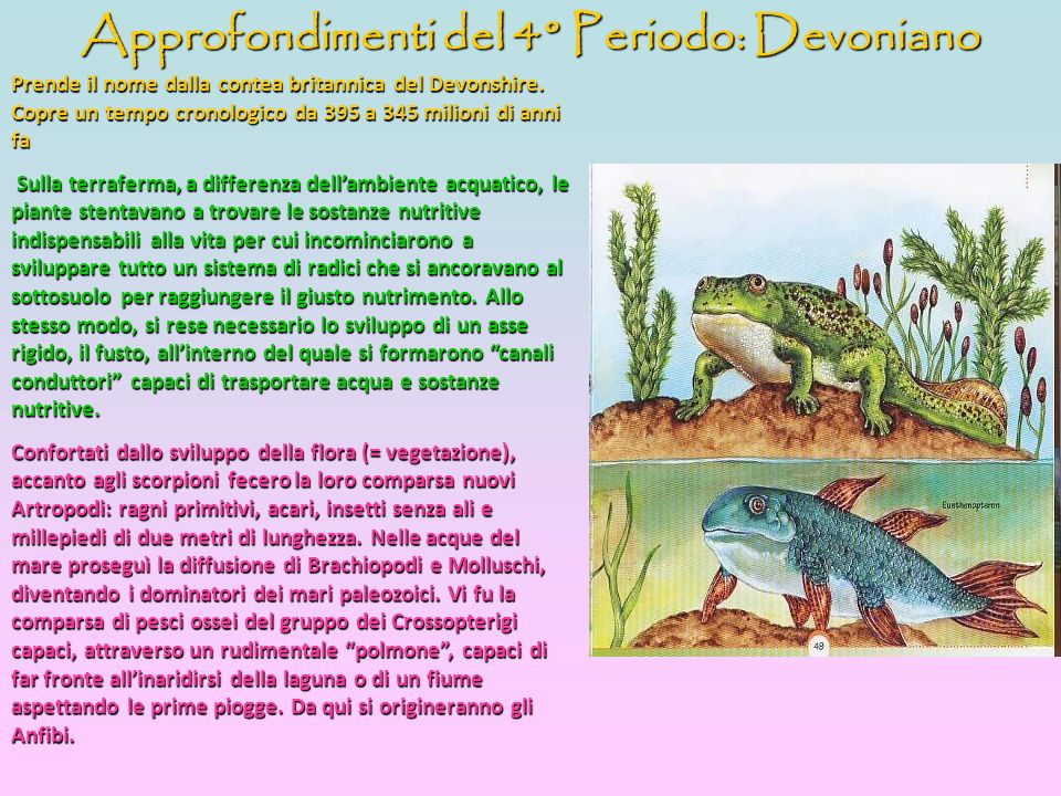 Approfondimenti del 4° Periodo: Devoniano