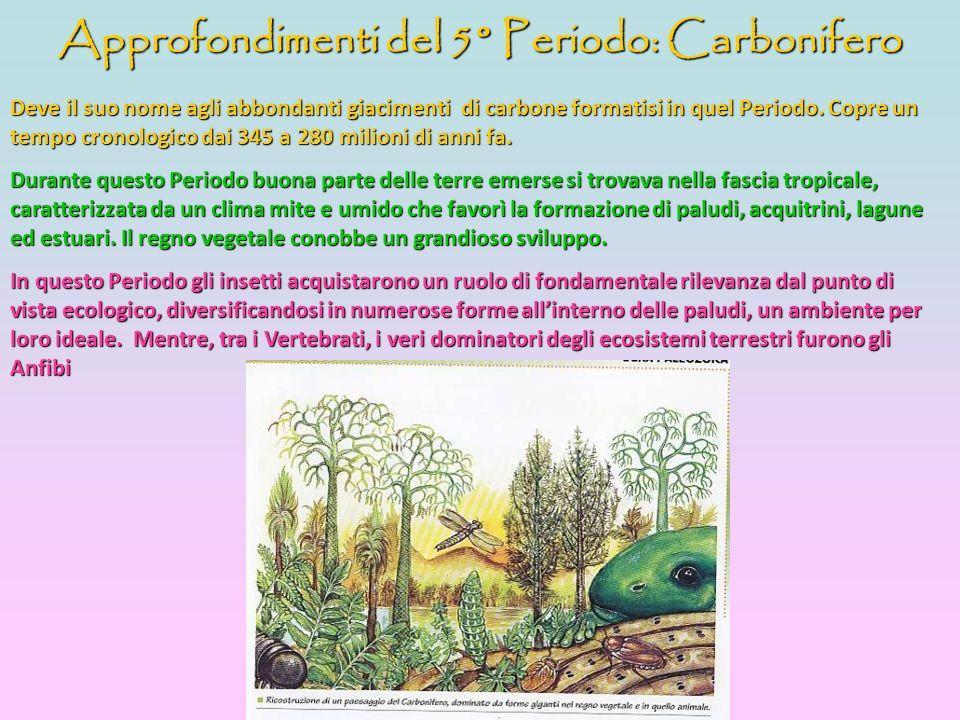Approfondimenti del 5° Periodo: Carbonifero