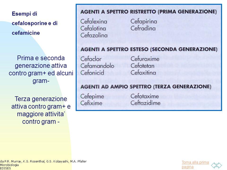 Prima e seconda generazione attiva contro gram+ ed alcuni gram-