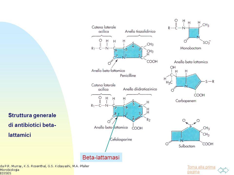 Struttura generale di antibiotici beta-lattamici
