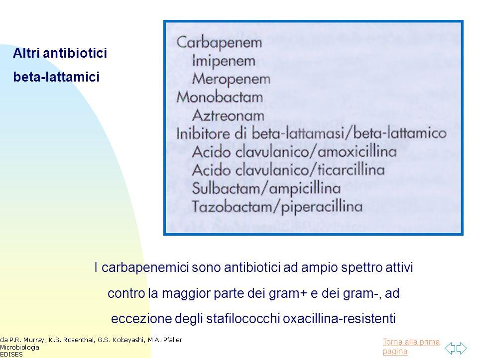 Altri antibiotici beta-lattamici