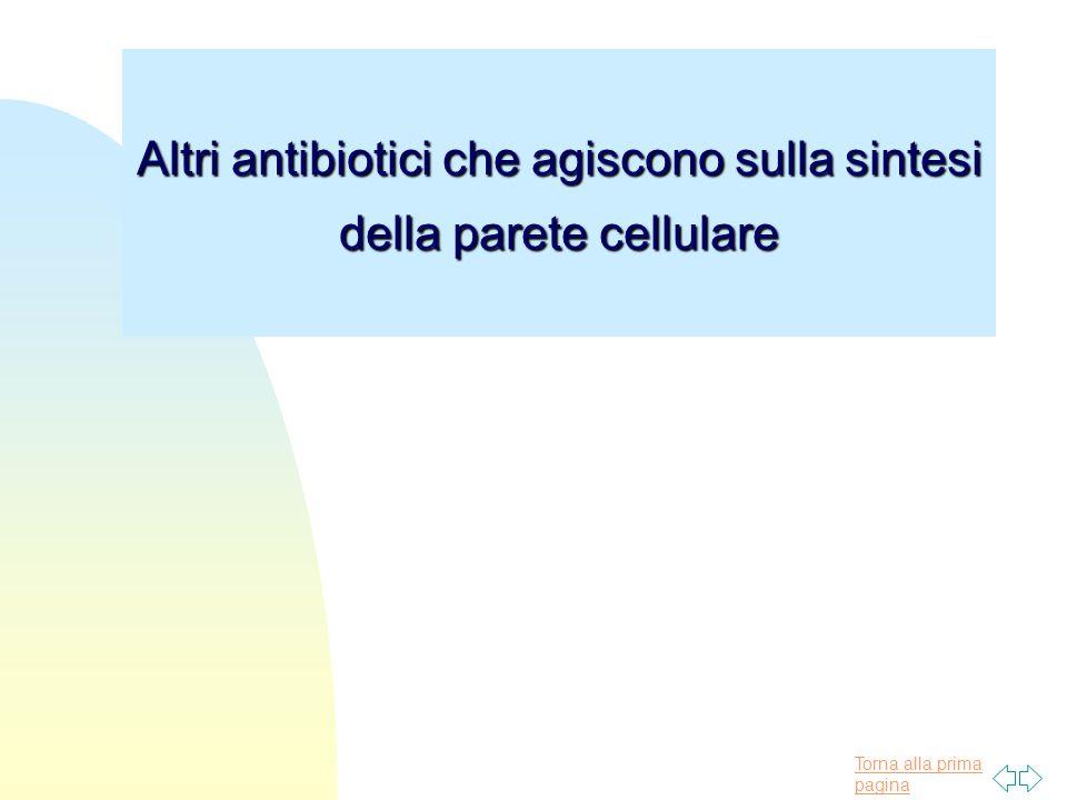 Altri antibiotici che agiscono sulla sintesi della parete cellulare
