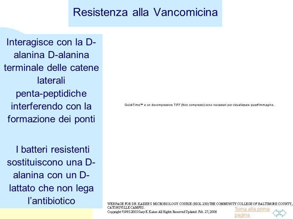 Resistenza alla Vancomicina