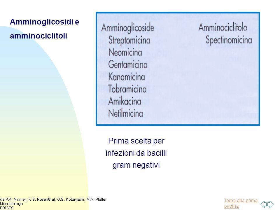 Amminoglicosidi e amminociclitoli