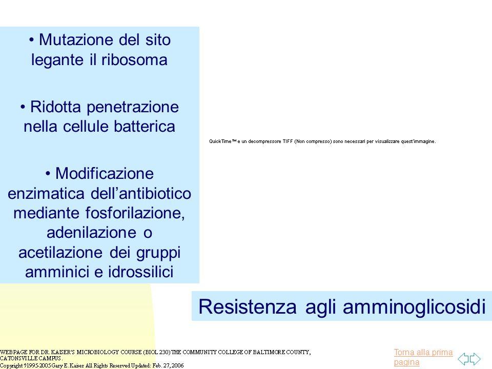 Resistenza agli amminoglicosidi