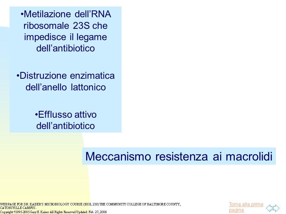 Meccanismo resistenza ai macrolidi