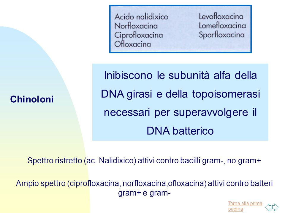 Inibiscono le subunità alfa della DNA girasi e della topoisomerasi necessari per superavvolgere il DNA batterico