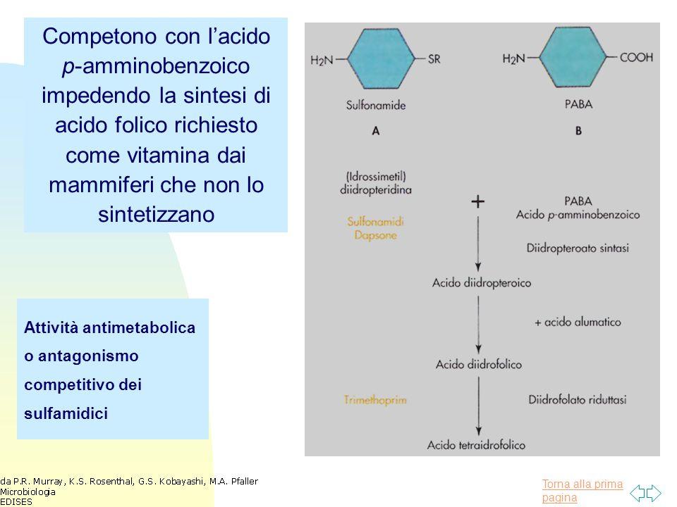 Competono con l'acido p-amminobenzoico impedendo la sintesi di acido folico richiesto come vitamina dai mammiferi che non lo sintetizzano