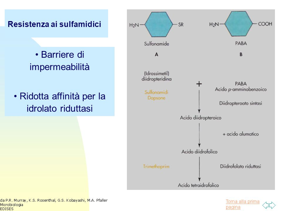 Barriere di impermeabilità