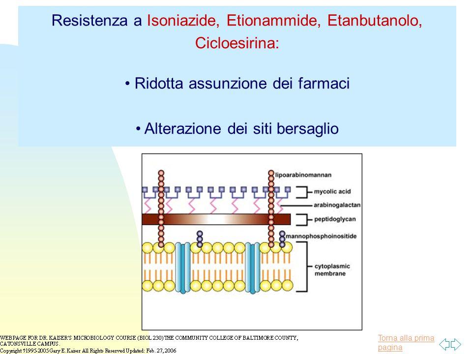 Resistenza a Isoniazide, Etionammide, Etanbutanolo, Cicloesirina: