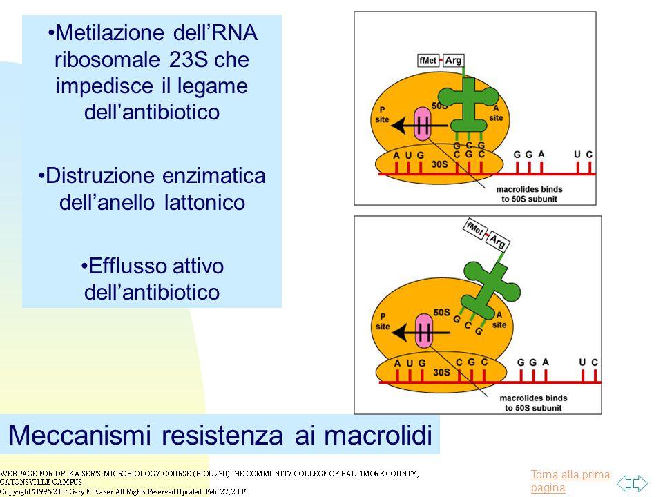 Meccanismi resistenza ai macrolidi
