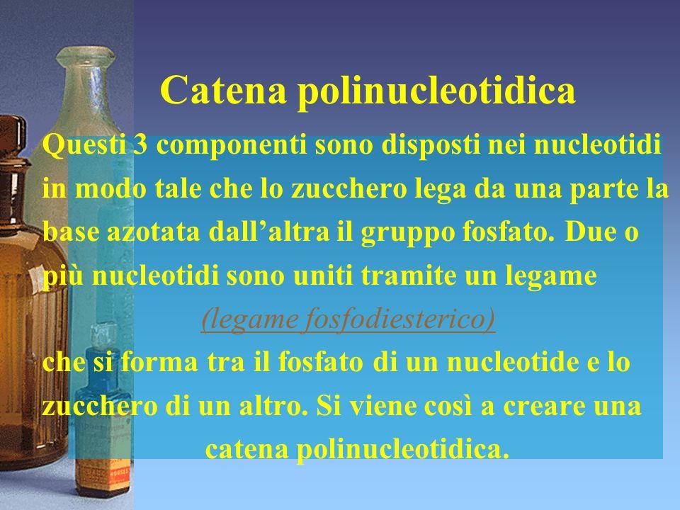 Catena polinucleotidica