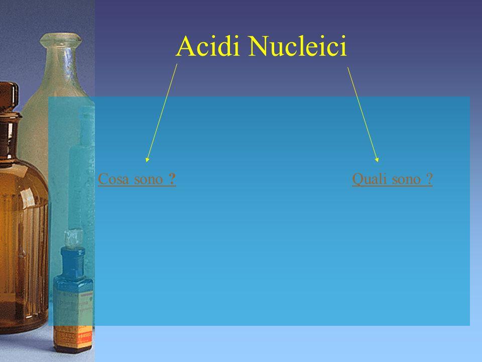 Acidi Nucleici Cosa sono Quali sono