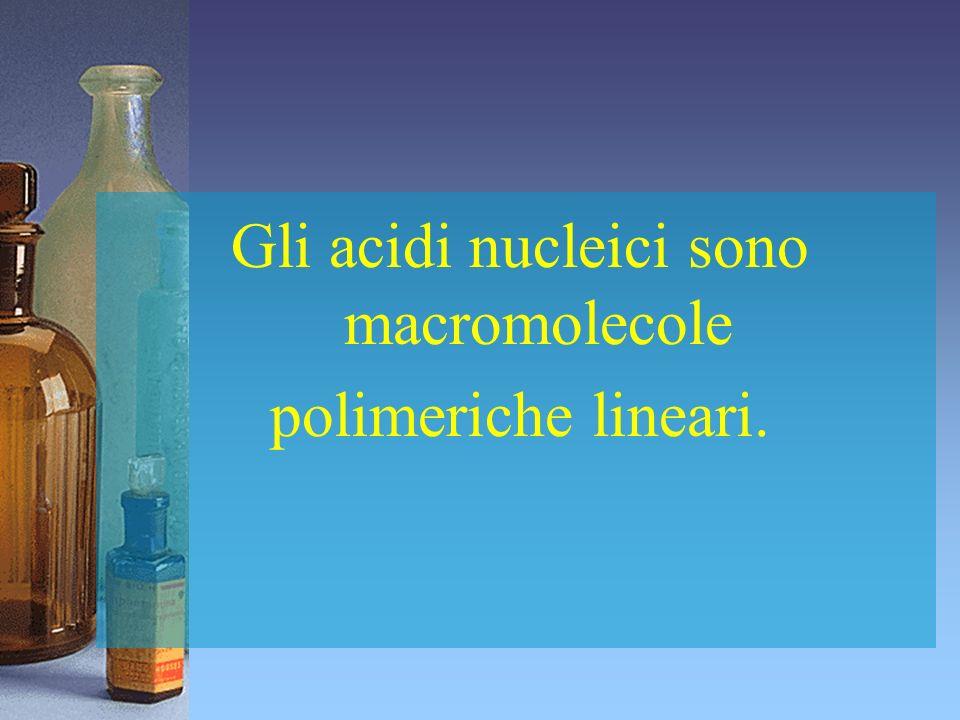 Gli acidi nucleici sono macromolecole