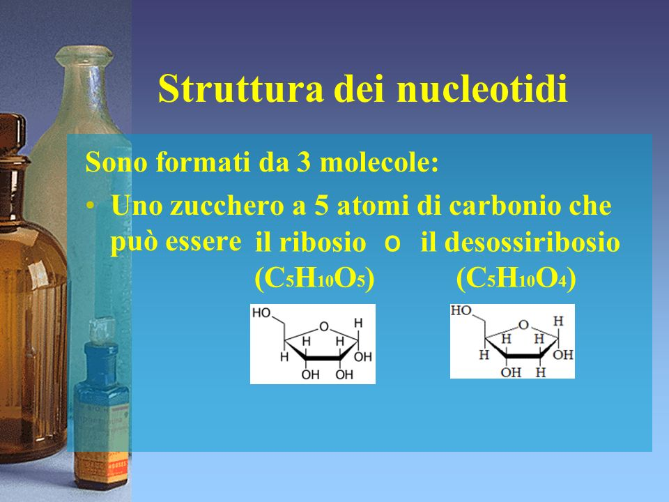 Struttura dei nucleotidi