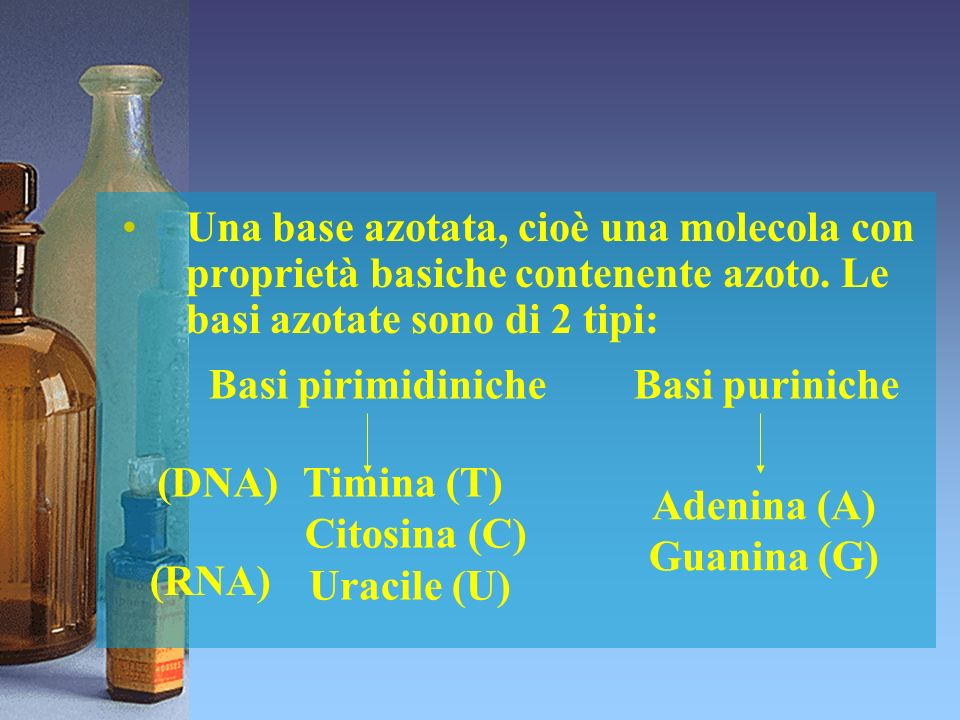 Basi pirimidiniche Citosina (C) Uracile (U) Adenina (A) Guanina (G)