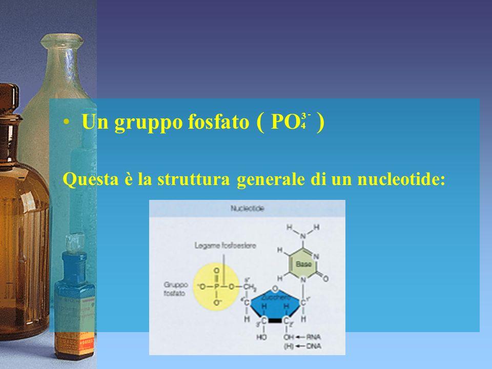 Un gruppo fosfato ( PO4 ) Questa è la struttura generale di un nucleotide: 3