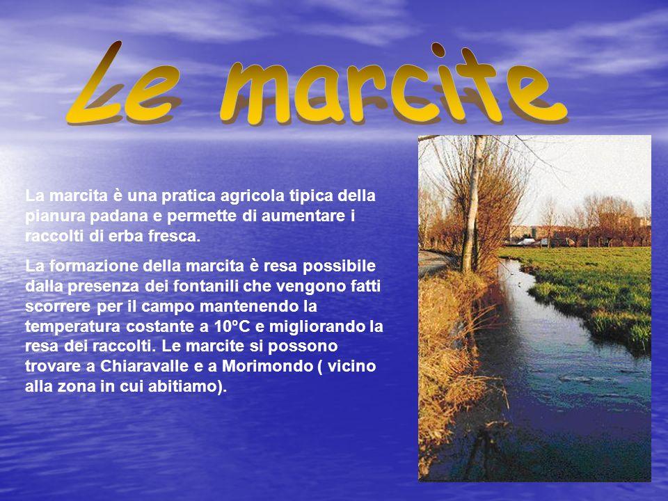 Le marcite La marcita è una pratica agricola tipica della pianura padana e permette di aumentare i raccolti di erba fresca.