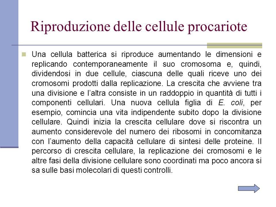 Riproduzione delle cellule procariote