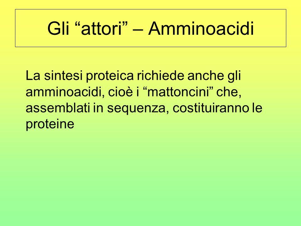 Gli attori – Amminoacidi