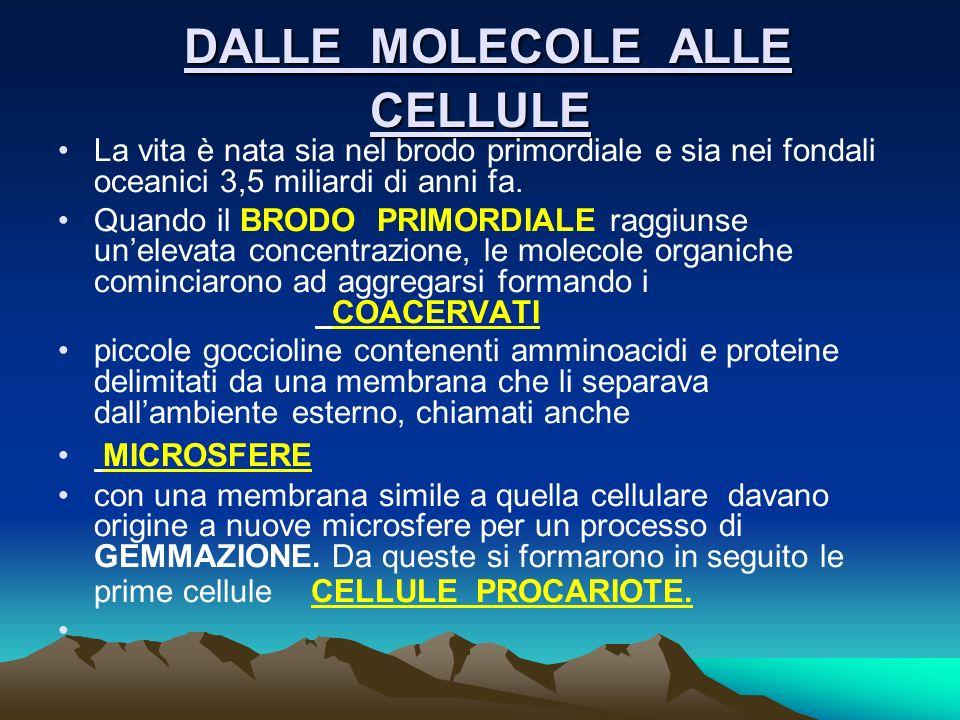 DALLE MOLECOLE ALLE CELLULE