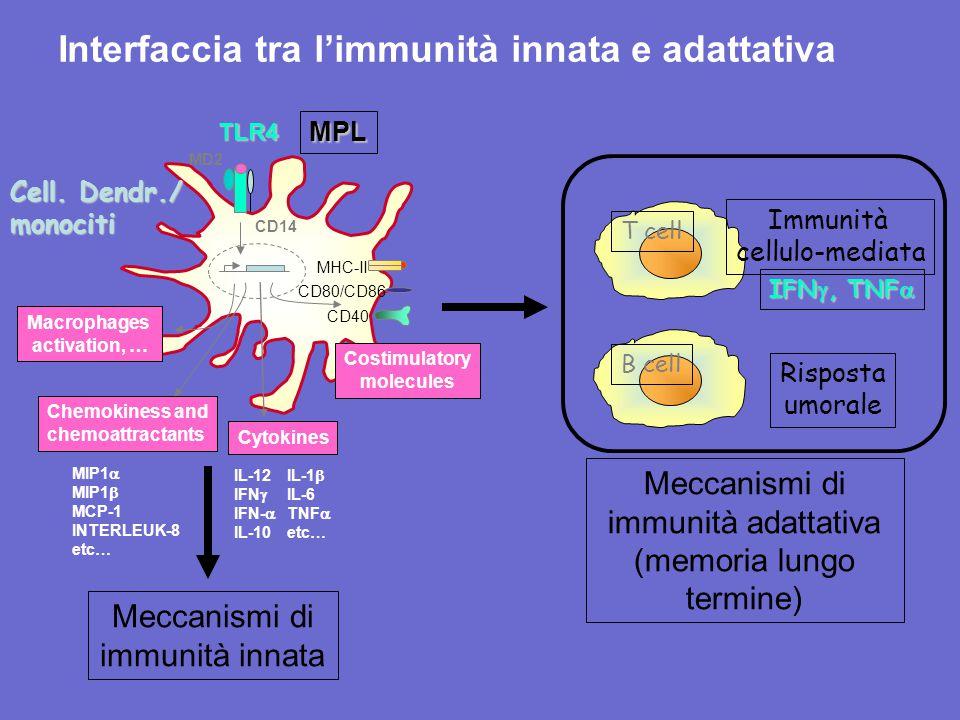 Interfaccia tra l'immunità innata e adattativa